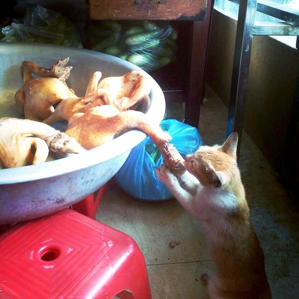 Eten in Hanoi - Karlijnskitchen.com